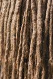 Verwicklung von Dreadlocks Nahaufnahme eines rasta Haares Lizenzfreie Stockbilder