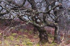 Verwirrtes Waldland Stockbilder