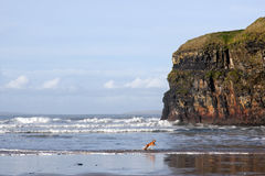 Verwischen Sie die Bewegung des Hundes laufend in Meer durch Klippen Lizenzfreies Stockbild
