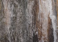 Verwischen Sie Hintergrund, Oberfläche der trockenen Kelpnahaufnahme des salzigen Blattes Lizenzfreie Stockfotos