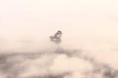 Verwischt vom Schattenbildbaum im Nebel Lizenzfreie Stockbilder