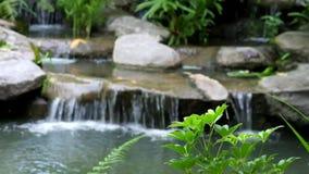 Verwischt vom Wasserfall, selektiver Fokus auf kleinen Niederlassungen des Baums stock footage
