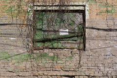 Verwitterte Backsteinmauer mit grünen Flecken Stockfoto