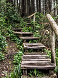 Verwitterte hölzerne Treppe im Wald Stockfotografie