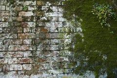 Verwitterte moosige rote und weiße Backsteinmauer mit Blumen Stockbild