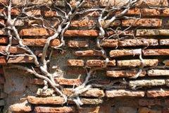Verwitterte und alte rote Backsteinmauer Stockfoto