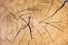 Verwitterter Querschnitt eines Baumkabels Lizenzfreies Stockfoto