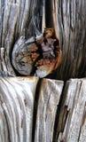 Verwittertes Holz Lizenzfreie Stockbilder
