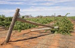 Verwoesting van Wijngaard, Mildura, Australië Stock Foto's