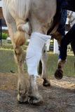Verwond Paard stock foto's