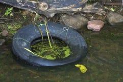 Verworfener Gummireifen im Wasser Stockfoto