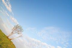 Verworfenes Bild des einsamen Baums Stockfoto