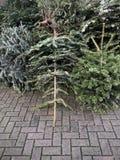 Verworpen die Kerstmisbomen op bestrating voor huisvuilverwijdering worden opgestapeld stock afbeeldingen