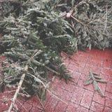 Verworpen Kerstmisbomen royalty-vrije stock foto's