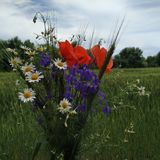 very beautiful bouquet of wildflowers stock photography