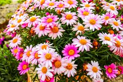 Very beautiful colorful flowers in spring stock photos