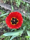 Very beautiful floral-mac royalty free stock photos
