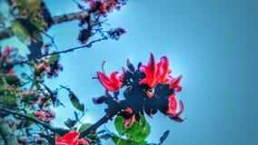 Polash flower royalty free stock image