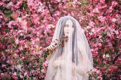 Very beautiful girl the bride under a veil, beige wedding dress near the tree Sakura stock photos
