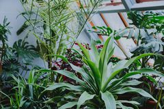 Very beautiful greenhouse with plants stock photo