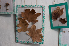 Very beautiful herbarium on the wall. Beautiful herbarium on the wall Royalty Free Stock Images