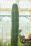 Very beautiful imposing cactus landscape in a greenhouse. Garden installation Royalty Free Stock Photography
