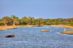 A very beautiful landscape with water pond and birds in the Yala Nationalpark Royalty Free Stock Images