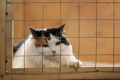 Very beautiful, but lonely sad fluffy cat, lying on cage in shelter and waiting for owner with home. Concept of humanity stock photo
