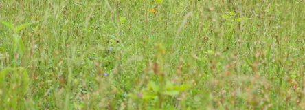 Background of wild green grass Royalty Free Stock Image