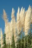 Very beautiful ornamental vegetation Royalty Free Stock Image