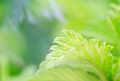 Very Beautiful Plants Stock Image