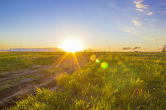 Very Beautiful Rural Landscape of Sunset. On field with Bright Glare of The Sun Royalty Free Stock Image