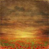 The very big blooming poppies field during sunny day. With grunge effect Stock Images