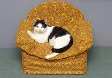 Very big cat Stock Photo
