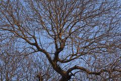 Texture of tree branches. Very branchy tree at sunset royalty free stock images