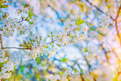 Very bright view on single small branch of Stock Image