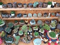 Very cactus species. Cactus rose rock. succulent. Sulcorebutia. Haworthia. royalty free stock images