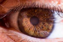 An eye closeup shot. A very clear eye taken with a closeup macro 1/1  lens Royalty Free Stock Images