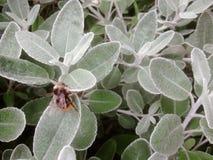Very close bee on a daisy bush stock image