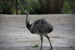 A very close view of a ostrich stock image