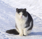 Very cold Cat Royalty Free Stock Images