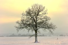 Very cold february afternoon in Lithuania royalty free stock photo