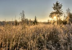 Very cold morning at meadow Stock Image