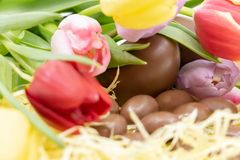 Very colorful graphic resource with tulips and chocolate eggs for Easter and the arrival of spring royalty free stock photos