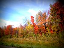 Very colorful row of fall autumn foliage trees with bright coloured leaves. Red leaf yellow orange green a rainbow of colors for fall road trip leaf peeping Royalty Free Stock Photos