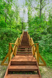 Very comfortable stairs up in the woods Stock Photo