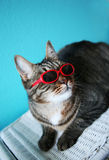 Very Cool Cat Royalty Free Stock Images