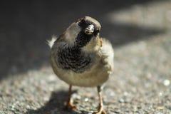 A very curious sparrow stock photo