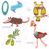 Very cute alphabet. O letter. Opossum, ostrich, owl, olive. Stock Photos