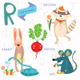 Very cute alphabet.R letter.Rat, raccoon, radishes, rabbit. Stock Photo